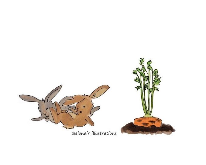bunny3firma