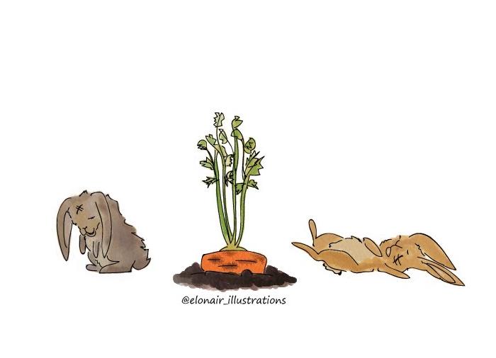 bunny4firma